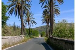 Программа тренировок  Tacx DVD IRONMAN®70.3 Mallorca - ES,  в интернет магазине спортивных товаров Tri-sport!